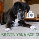 What Drives Your Dog Crazy?