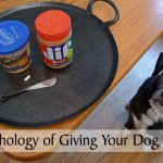 The Psychology of Giving Your Dog a Pill
