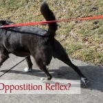 What is Opposition Reflex?