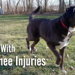 Dealing With CCL Knee Injuries