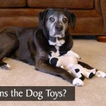Who Owns the Dog Toys?