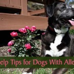 12 Self-Help Tips for Dogs With Allergies