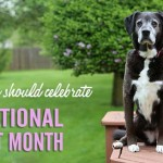 Why You Should Celebrate National Pet Month