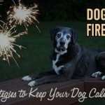 Dogs and Fireworks - 14 Strategies to Keep Your Dog Calm