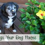 14 Things Your Dog Hates