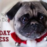 12 Ways to Help Your Dog With Holiday Stress