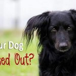 Is Your Dog Stressed Out?